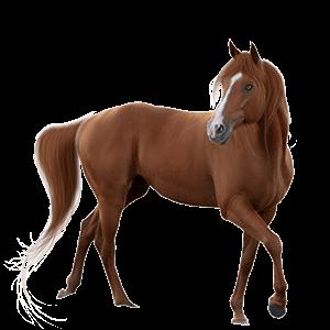 Mundo del caballo
